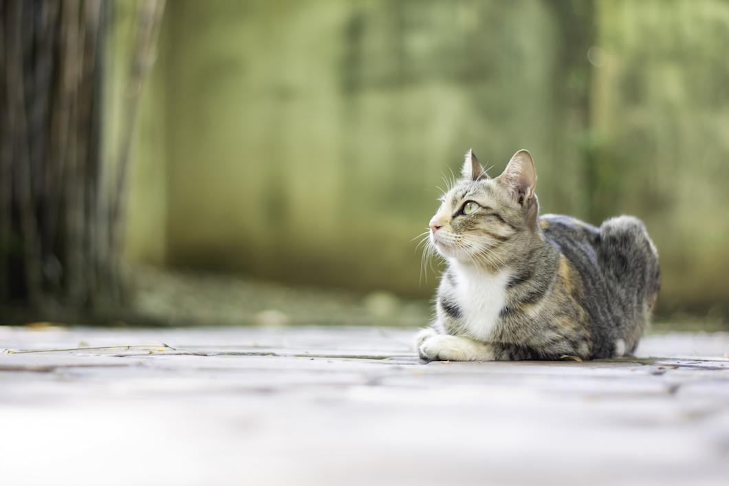 Trotz dünner katze fressen immer wird alte Meine Katze