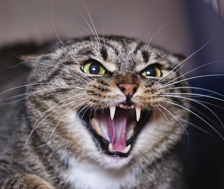 Katzenverhalten und -Körpersprache verstehen | PURINA®