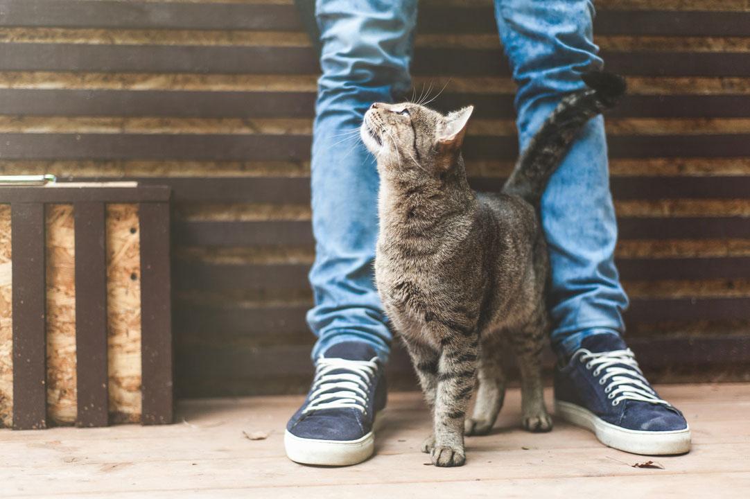Cat Stellung
