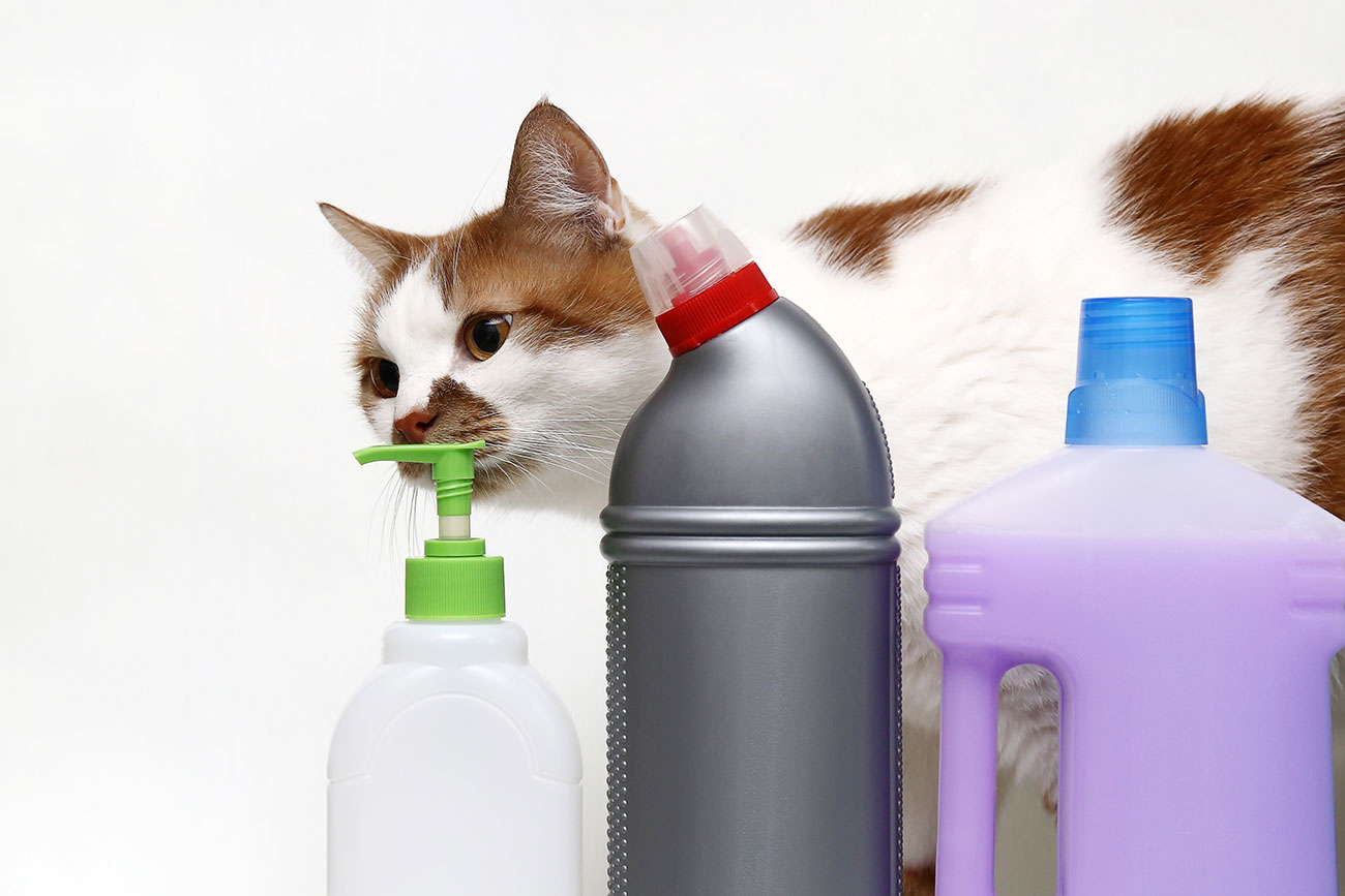 Schnittlauch Giftig Für Katzen